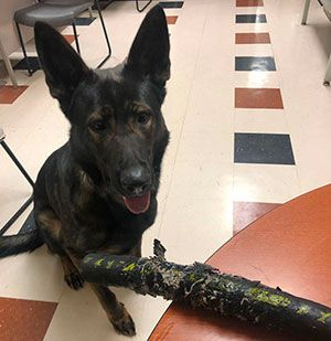 K-9 Police Force's Favorite Toy Is Clemco 4-Ply Blast Hose